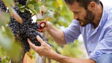 ブドウ園からワイングラスまで、6つのステップで。