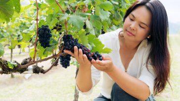 新しい緯度のワイン、低緯度のワイン、高緯度のワイン