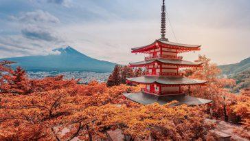 일본 와인 산업의 내부