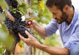 วิธีการทำไวน์: จากไร่องุ่นไปจนถึงแก้วของคุณใน 6 ขั้นตอน