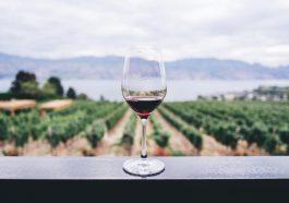ไวน์คืออะไร? คำอธิบายที่ชัดเจนและเข้าใจง่าย