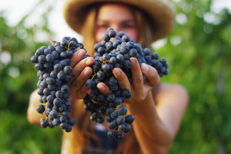 Đúng hay Sai: Rượu vang làm từ một loại nho luôn tốt hơn rượu vang sử dụng hỗn hợp nho