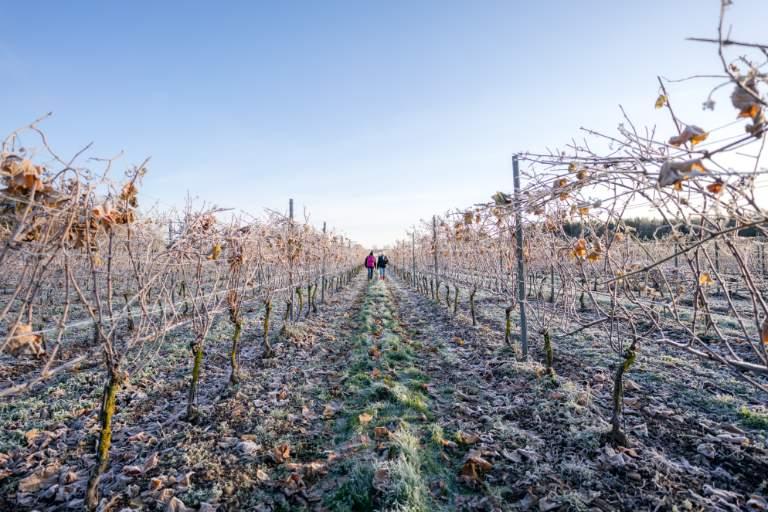 High Latitude Wines