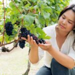 What Are New Latitude Wines | Asian Wines