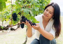 What Are New Latitude Wines   Asian Wines