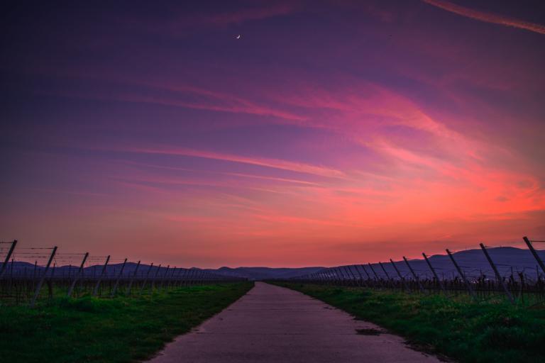 以下哪种葡萄园种植方式与月亮周期相关